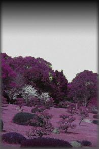 写真のiphone4壁紙 ピンク 赤の可愛い写真
